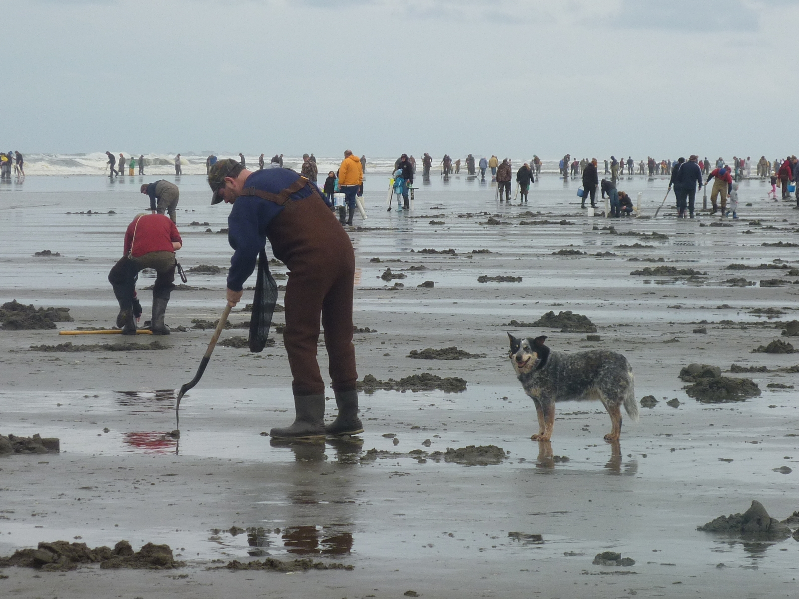 Clam harvesters