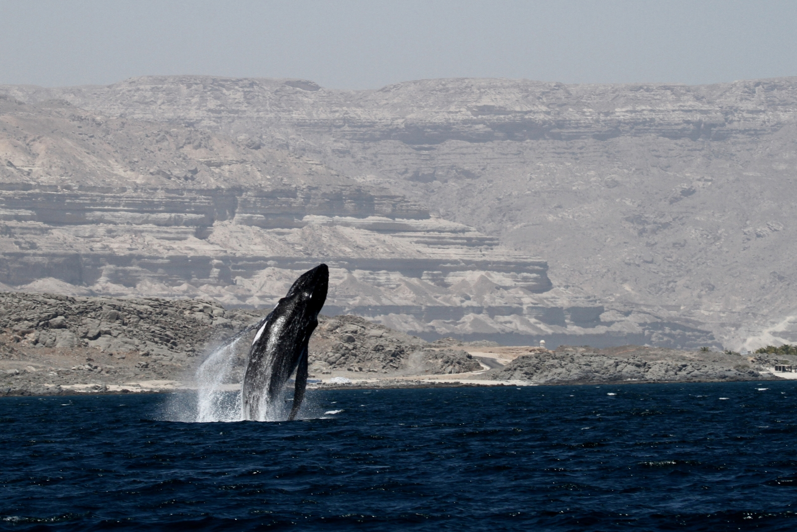 humpback whales starting to recover after decades of