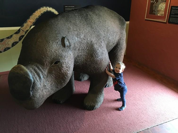 bull sized wombat