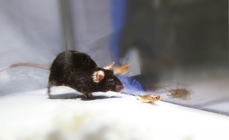 mice killing machine