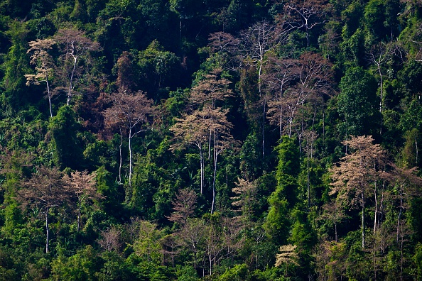 forest Cambodia