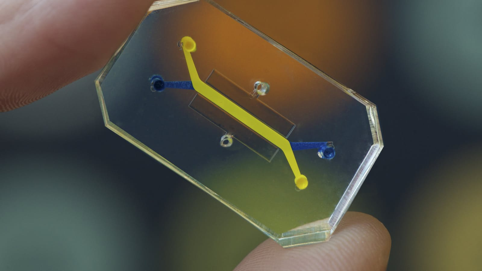 Wyss Institute's Organ-on-a-chip
