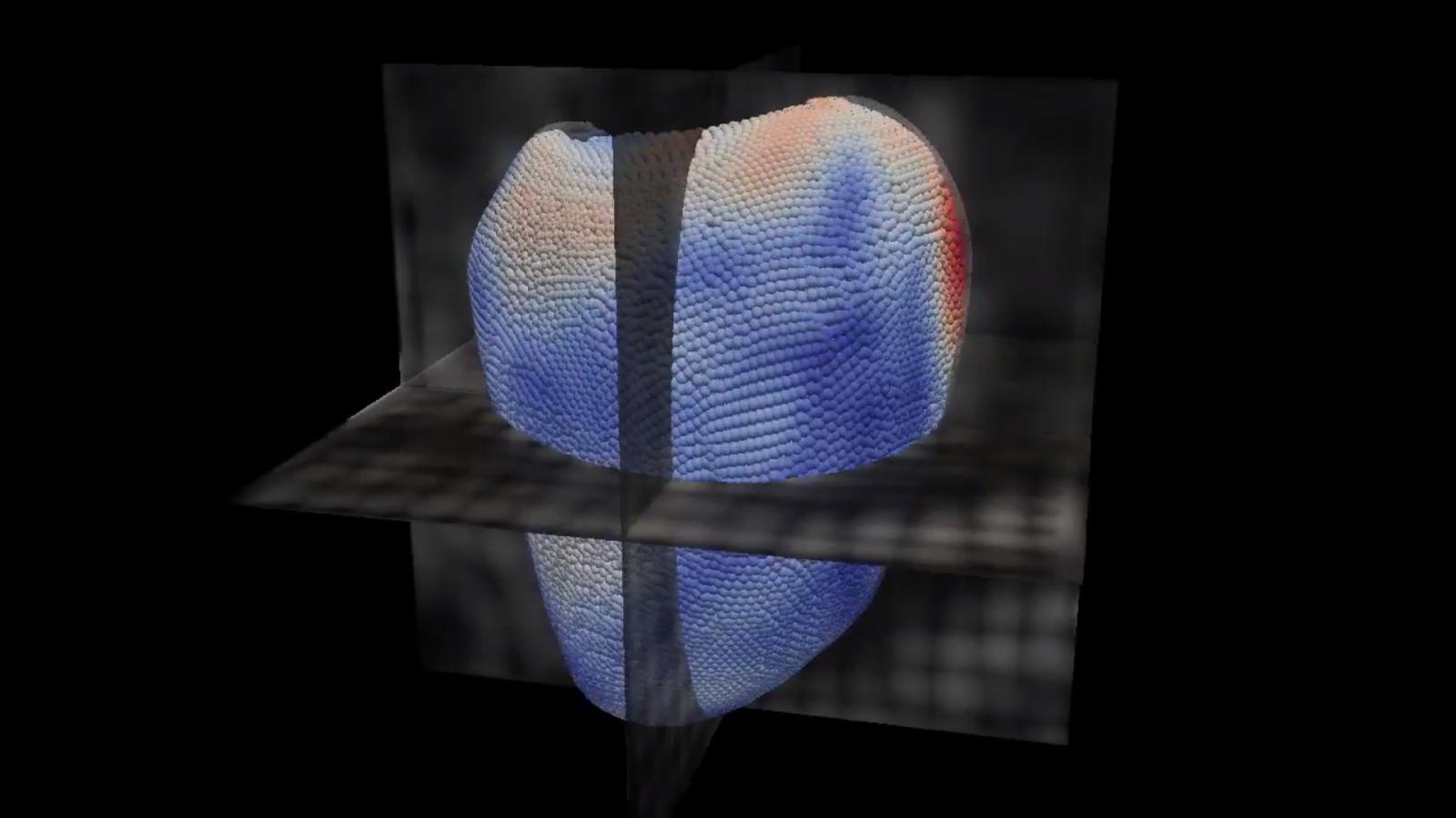 LMS 3D virtual heart