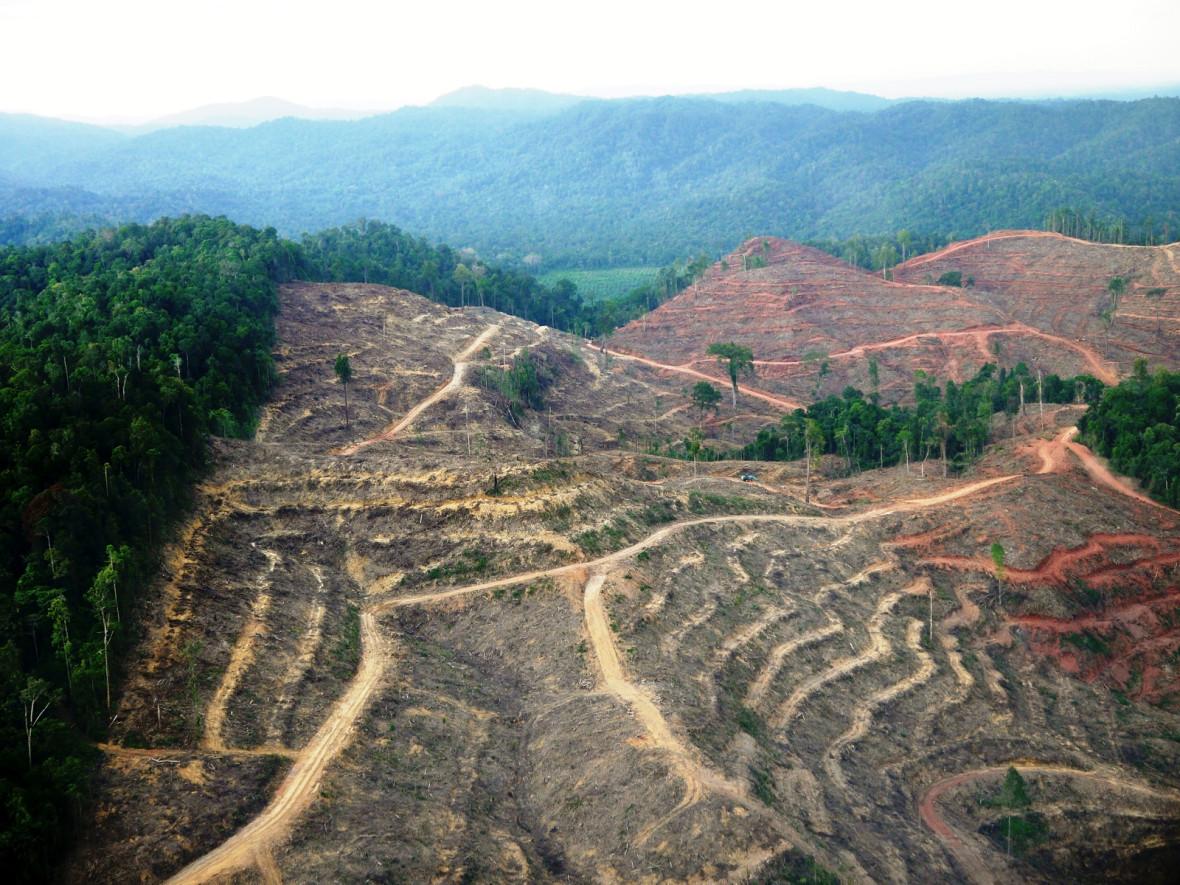 Sumatra deforestation