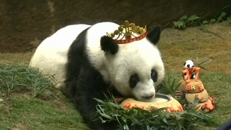 Watch oldest giant panda in captivity celebrate 37th birthday