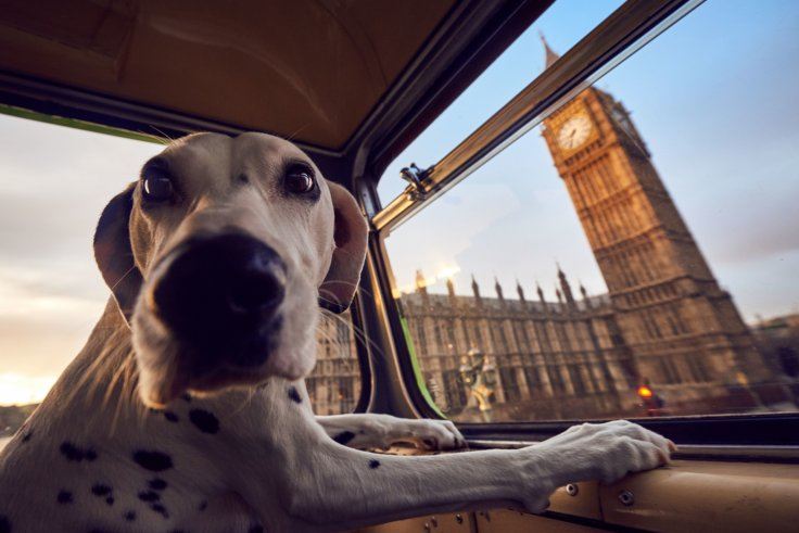 More than dog tour bus