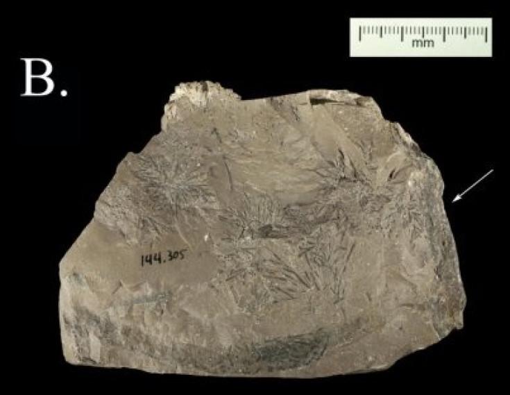 neanderthal rock