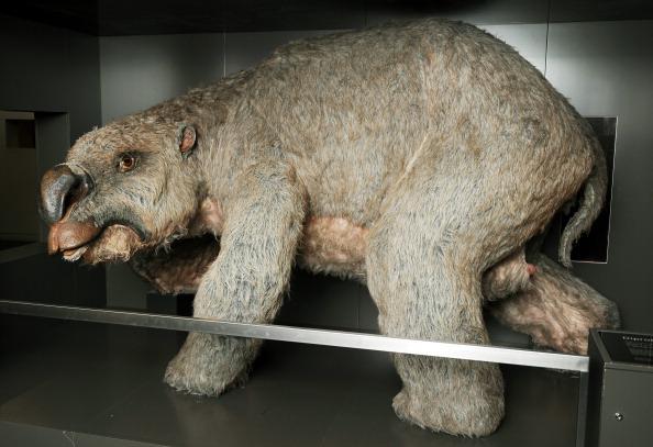 megafauna Australia