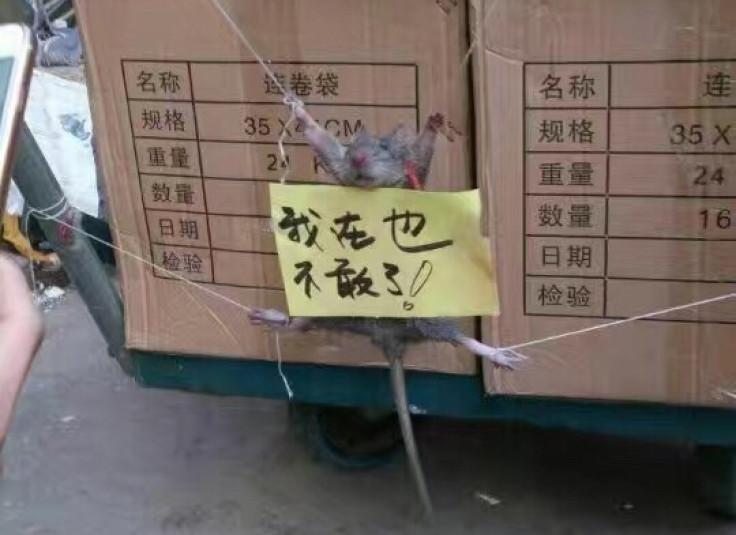 rat tied up China