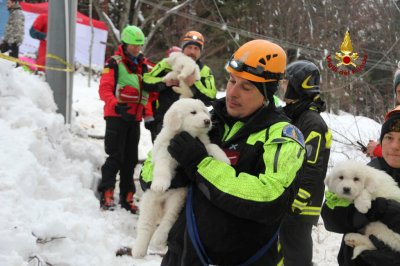 Italy avalanche puppies rescued