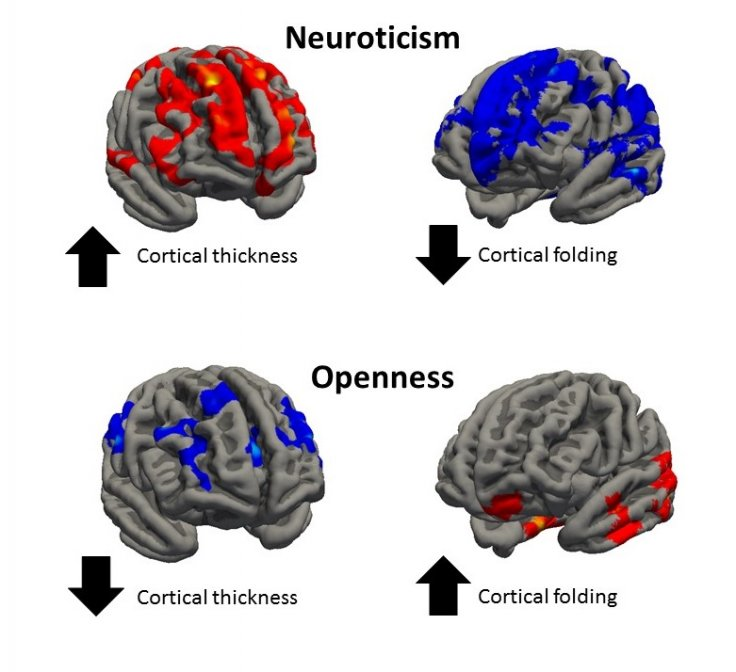 Personality brain structure