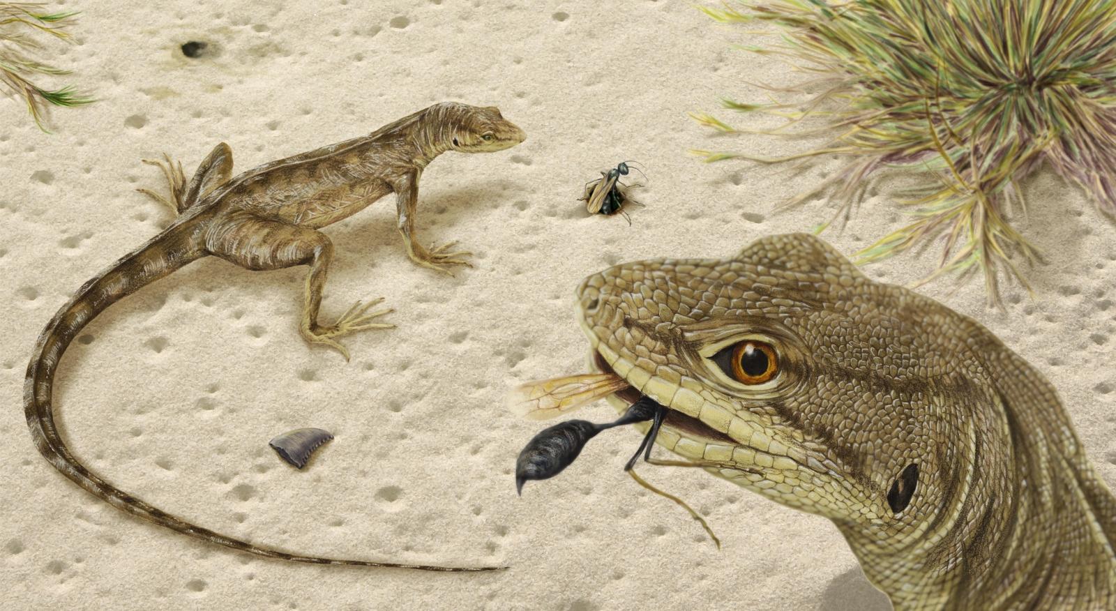Magnuviator ovimonsensis