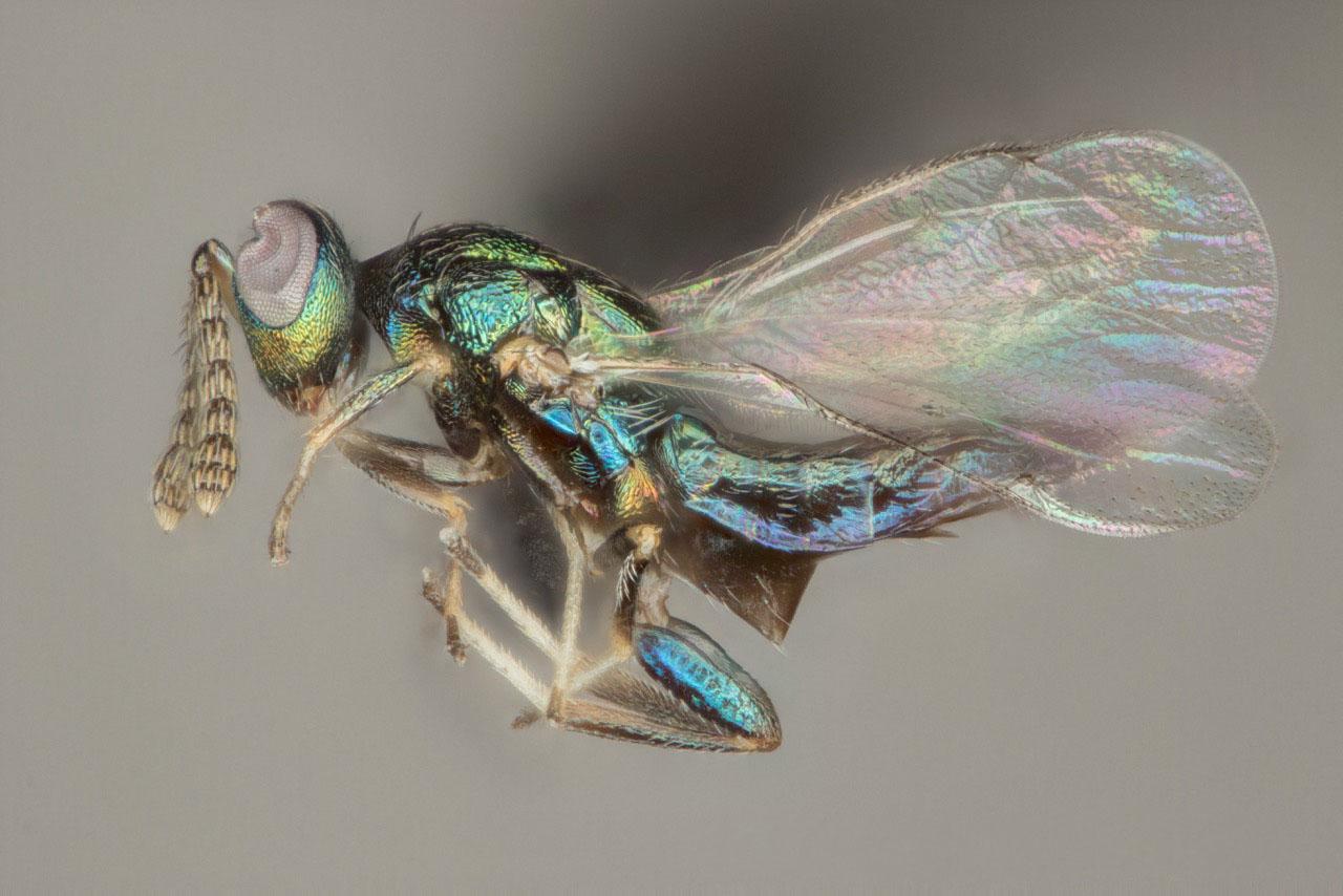 evil wasp