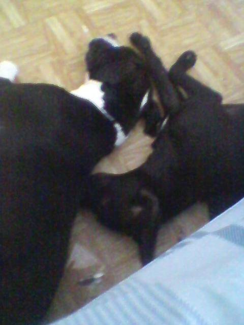 Amber Finney dogs