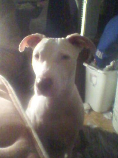Amber Finney dog