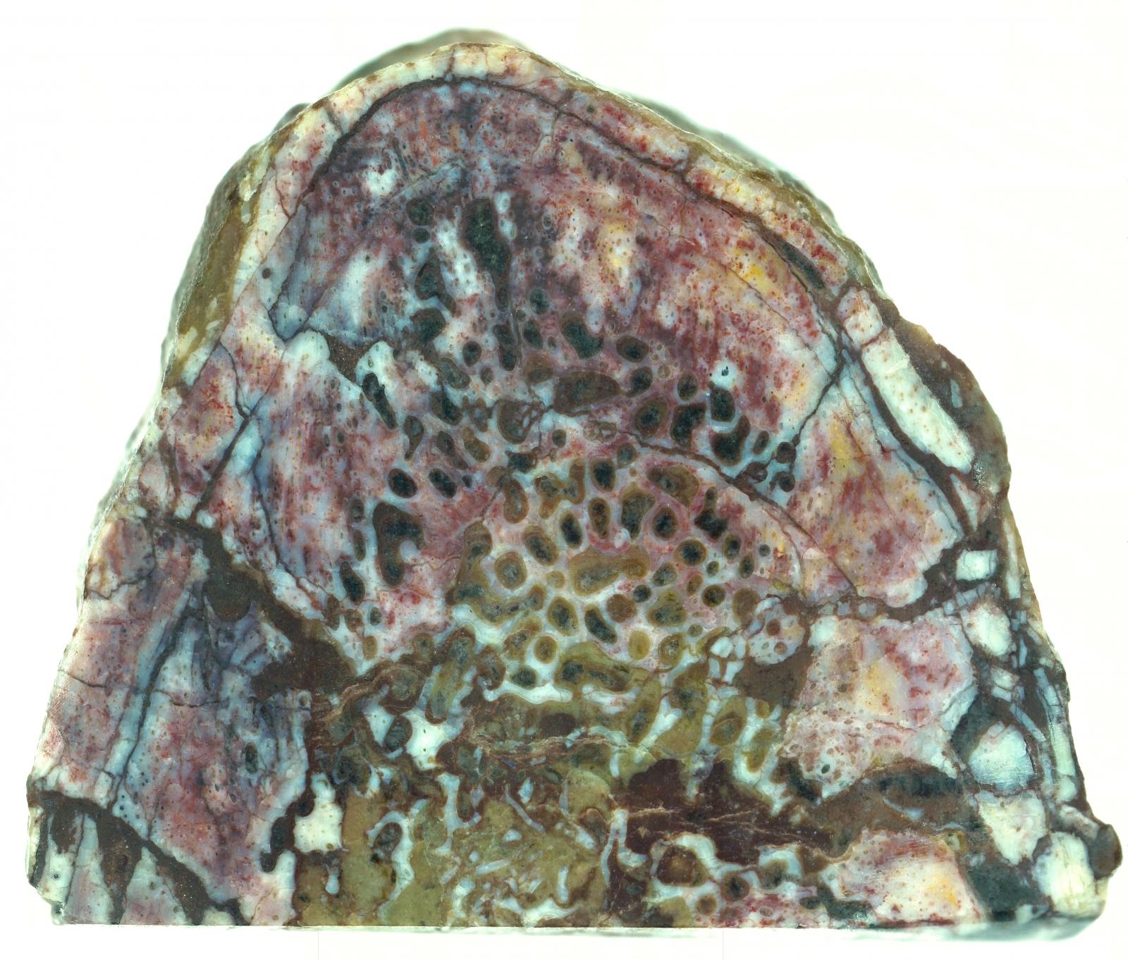 Lufengosaurus rib