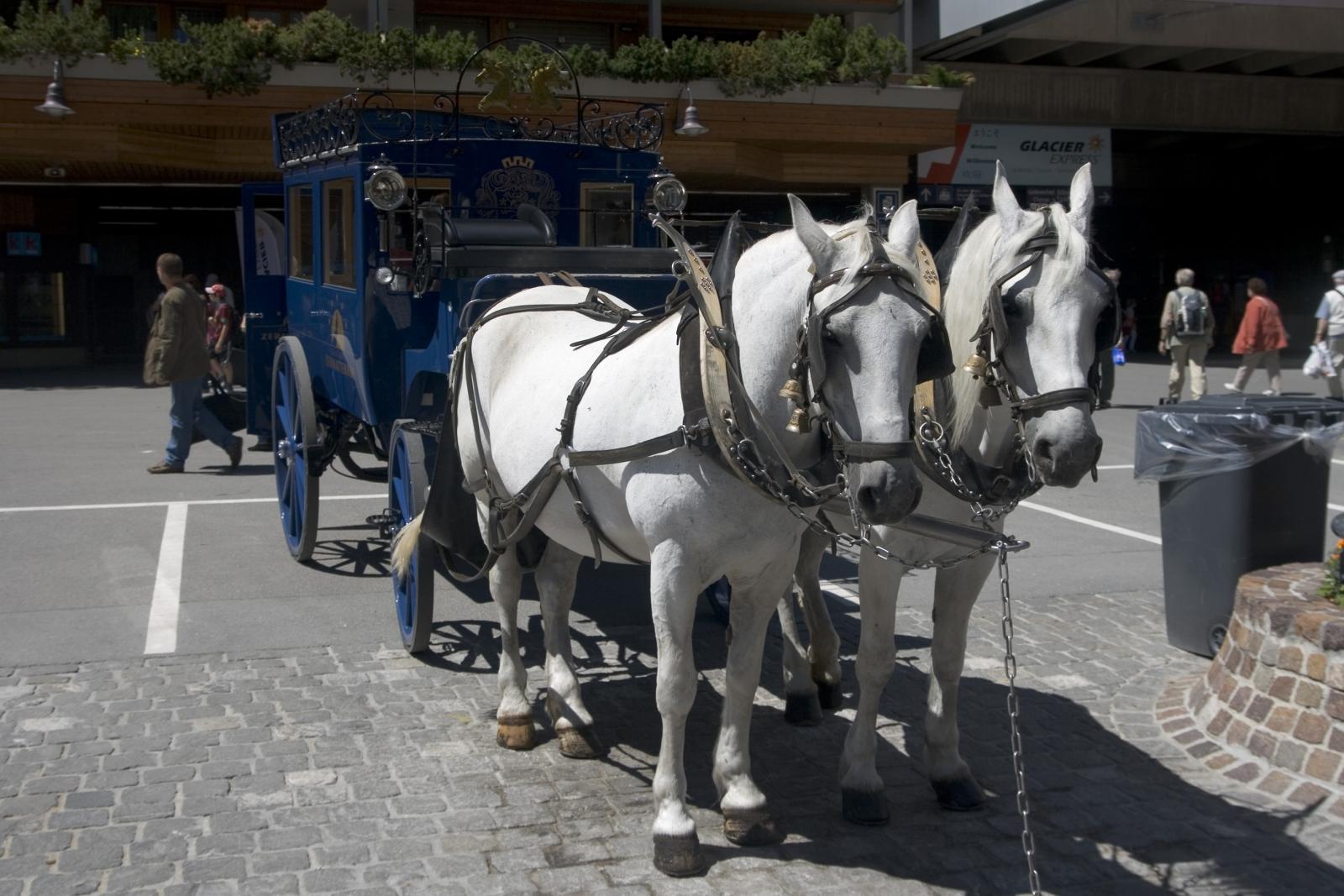 Horses Zermatt