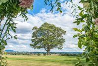 View at Hencote