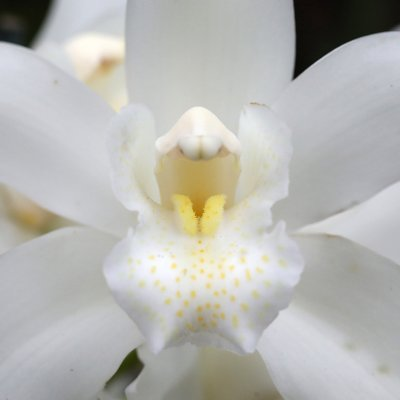 Orchids Festival