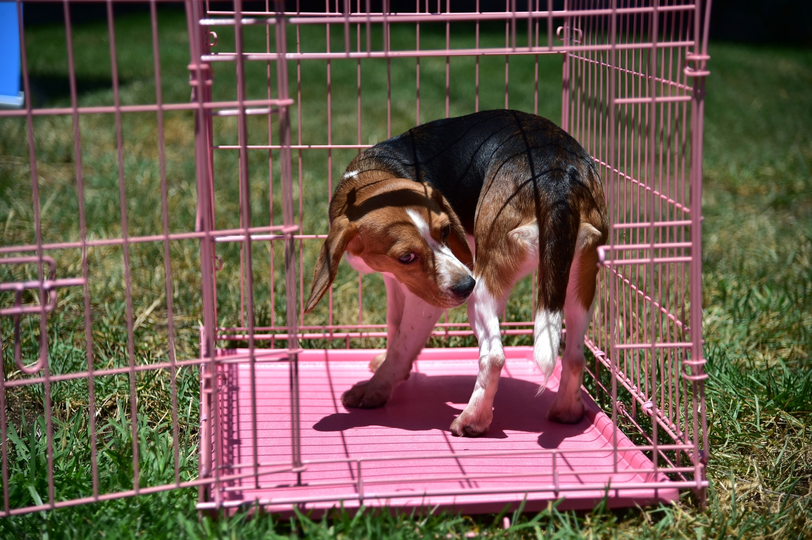 US government quietly took down thousands of animal-welfare data offline