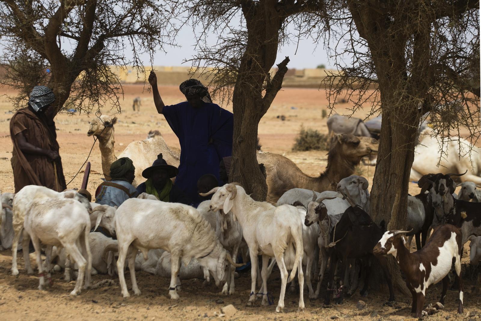Jihadist threat in Mali