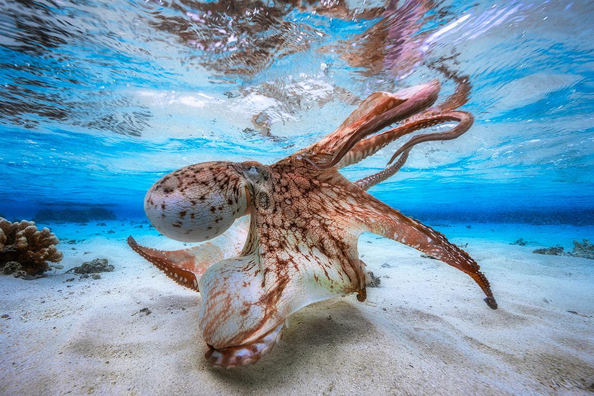 Underwater Photographer of the Year 2017
