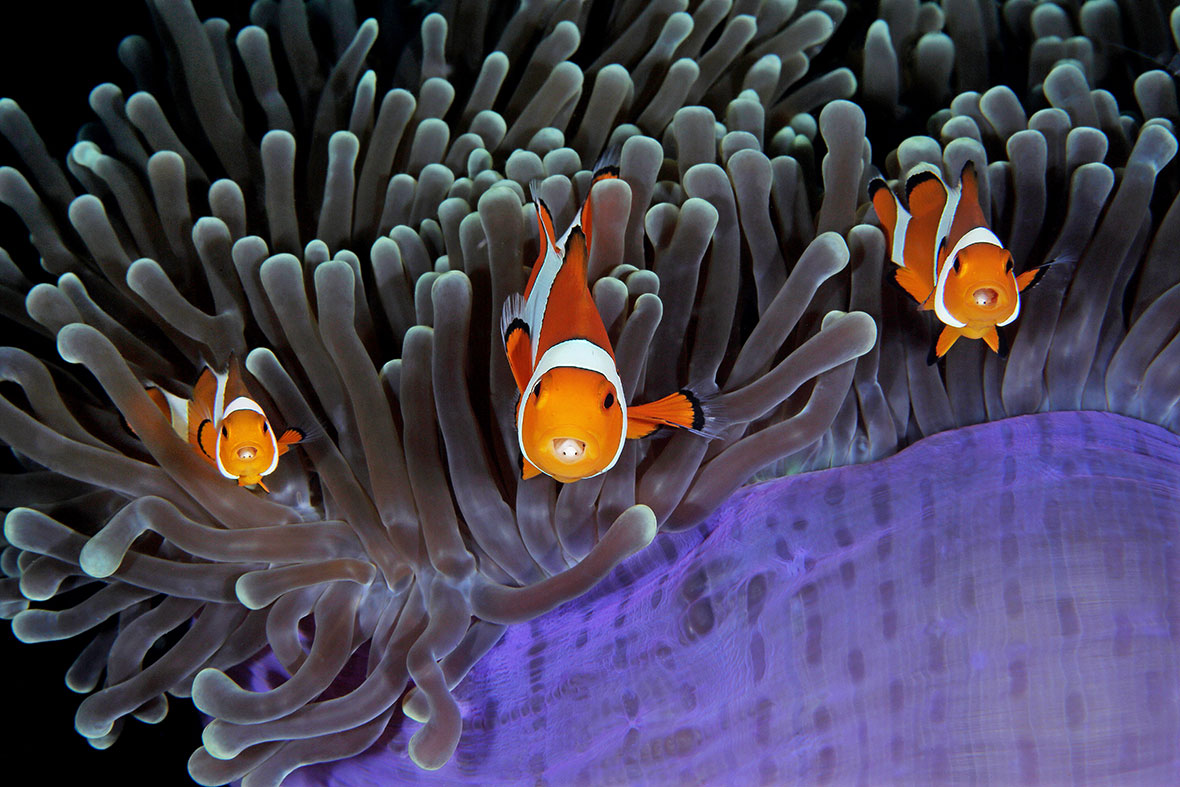 Underwater Photographer of the Year 2017