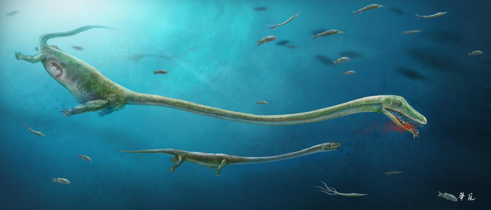 Dinocephalosaurus