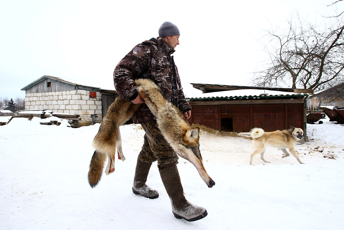 Hunting wolves in the Chernobyl nuclear exclusion zone ...