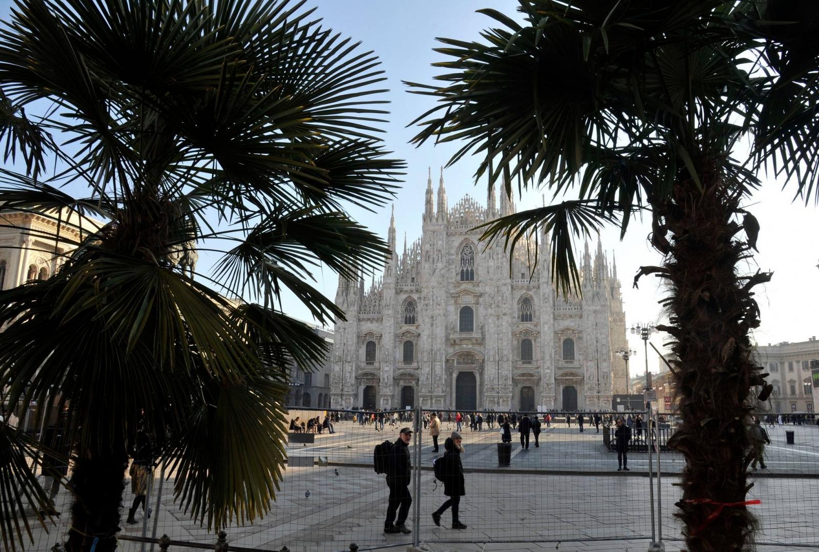 Palme in Piazza del Duomo
