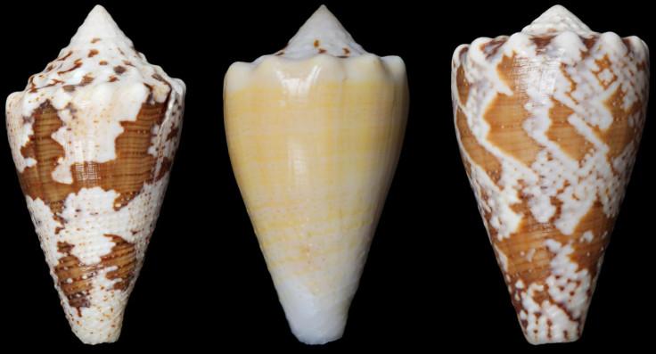 snail painkiller