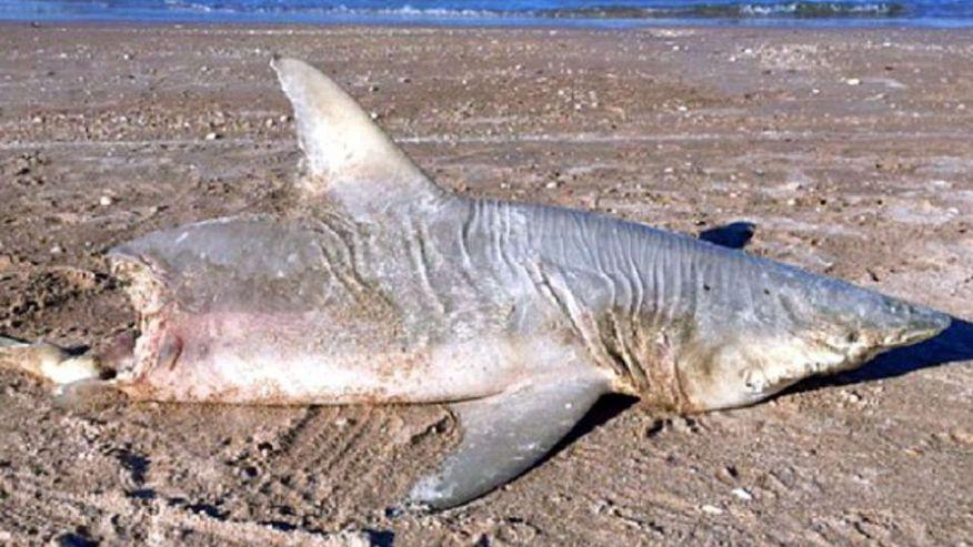 Half a shark