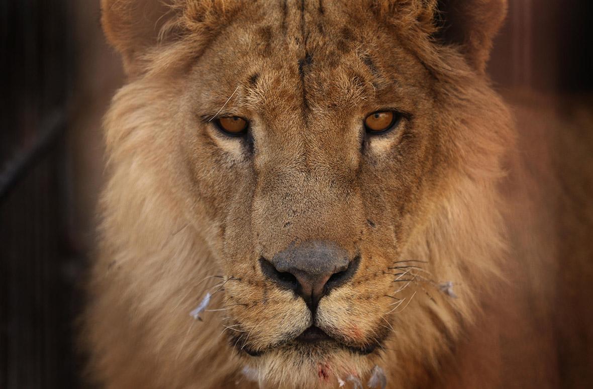 Mosul Zoo Nour Park Four Paws Iraq