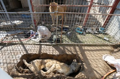 Mosul Zoo Nour Park Four Paws Iraq