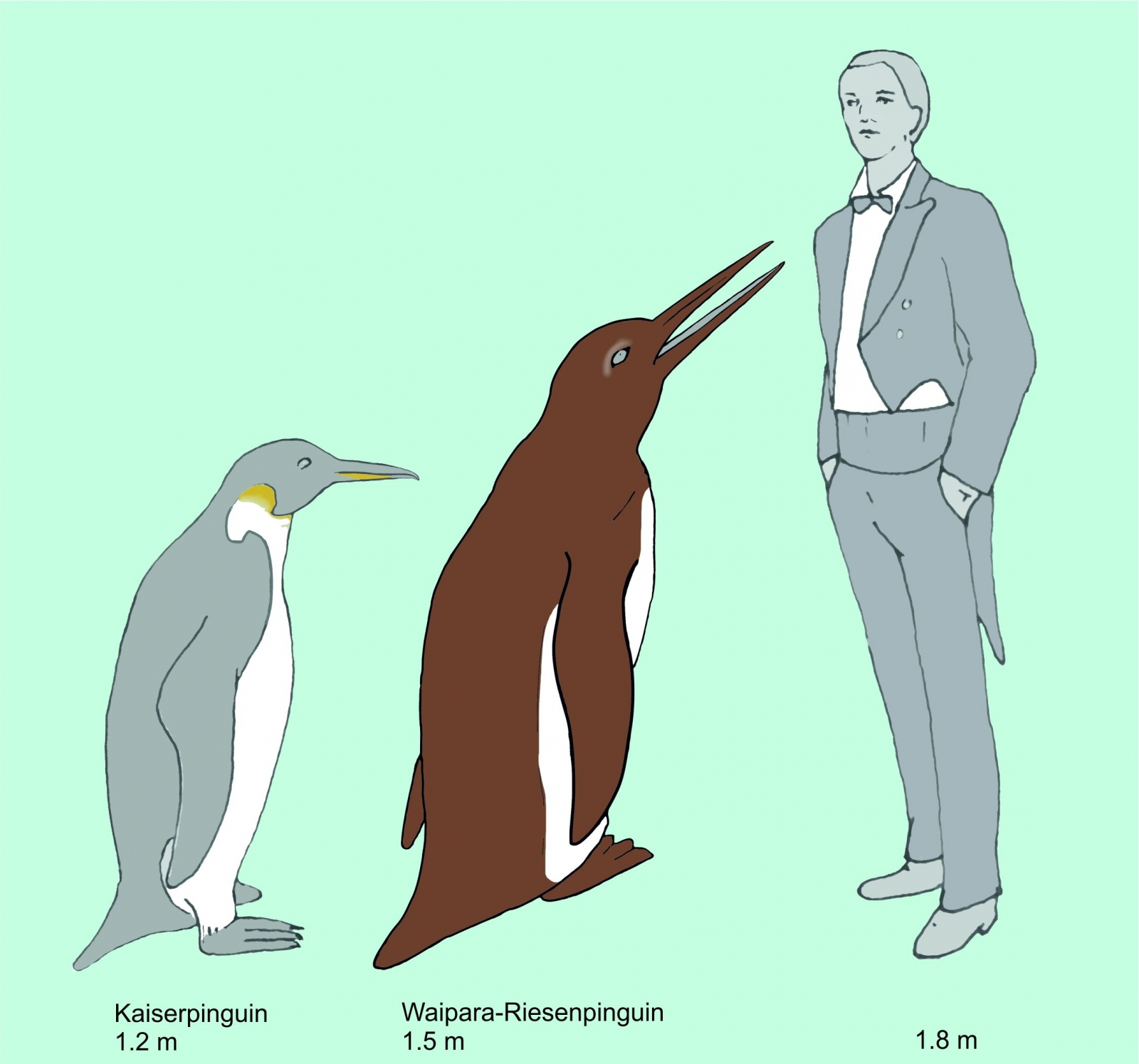 61-million-year-old fossil of giant penguin indicates \'enormous ...