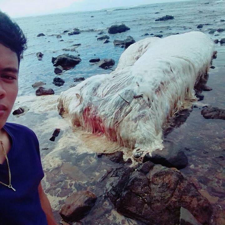 sea cow dugong