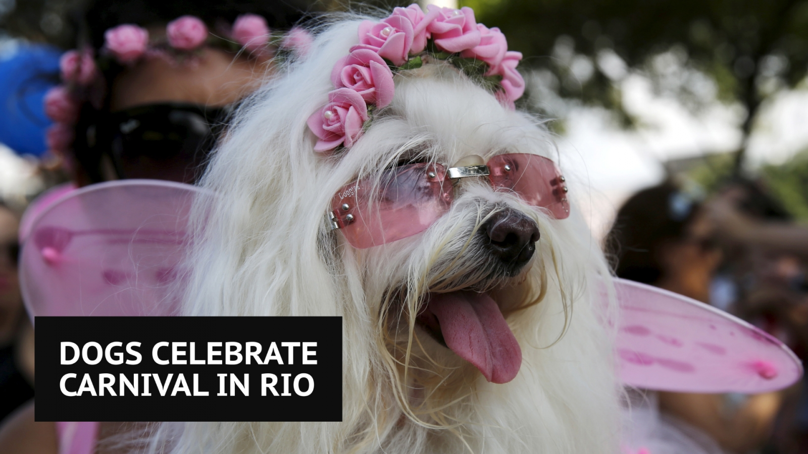 dogs-celebrate-carnival-with-special-pooch-parade-in-rio