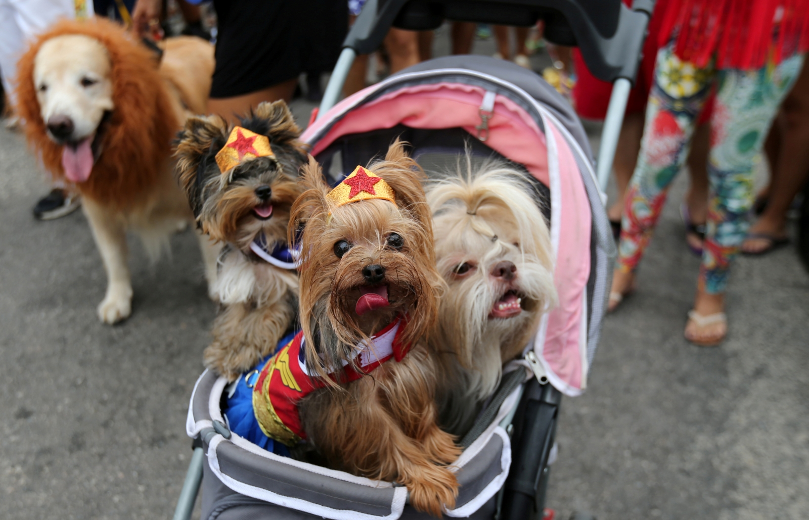The Rio dog carnival, known as the Blocao – with 'bloco' meaning street party and 'cao' dog