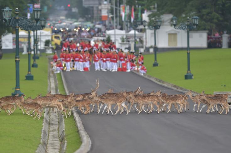 Saudi King Indonesia visit