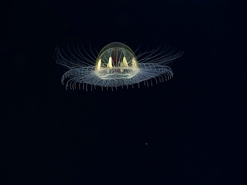 cosmic jellyfish