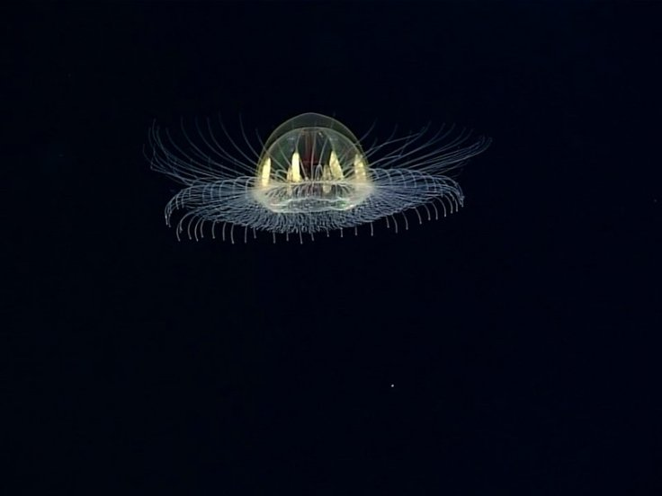 cosmic jellyfish
