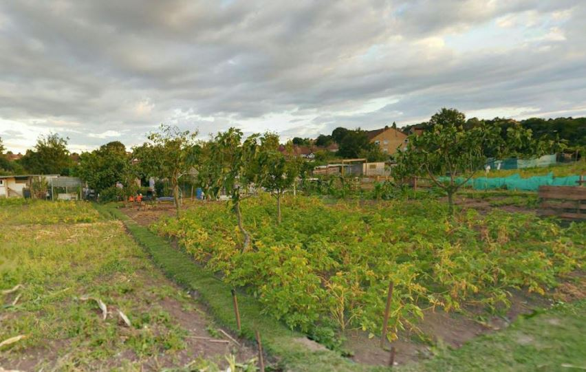 colindale allotment