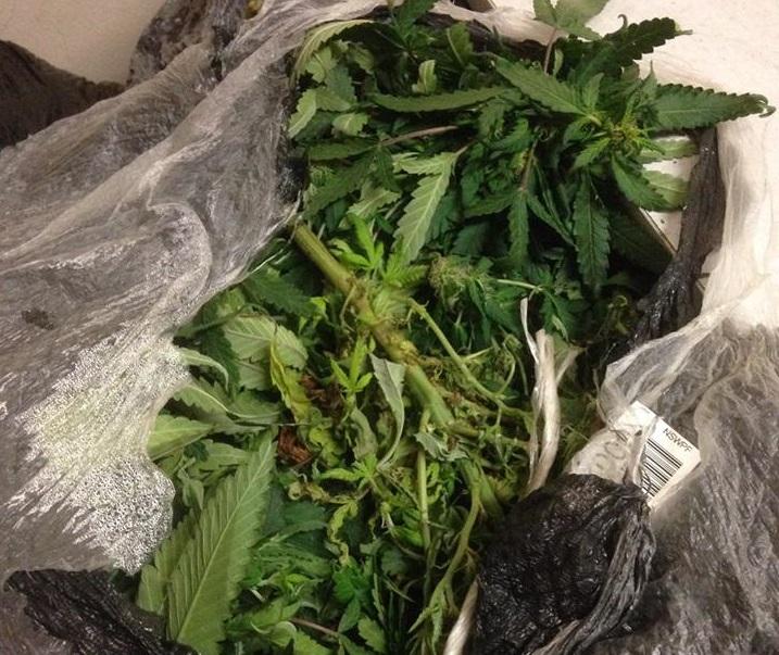 bags cannabis