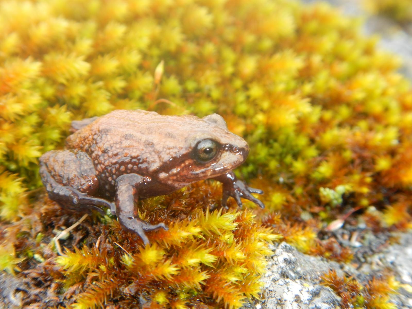 frog Attenborough
