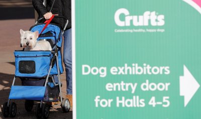 Crufts arrivals