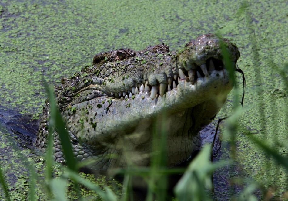 Norman Chiwawu fought off crocodile with machete