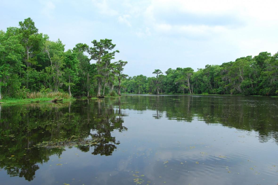 Bayou wetlands