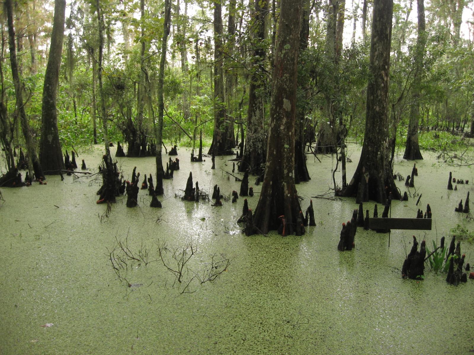 Barataria wetlands