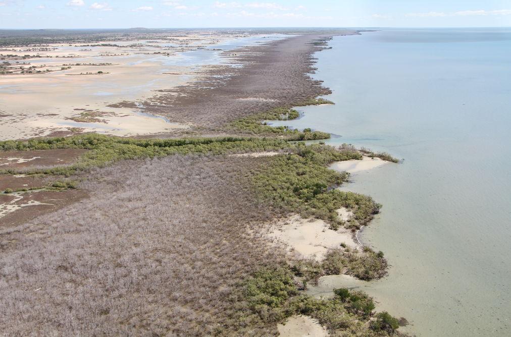 mangrove dieback