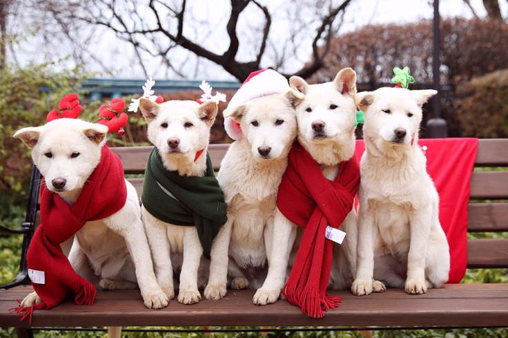 Park Geun-hye's pet dogs